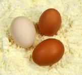 Производство яичного порошка