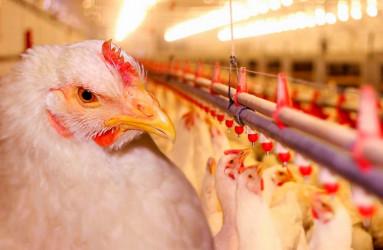 Открываем птицеферму: как закрепиться на рынке и увеличить обороты