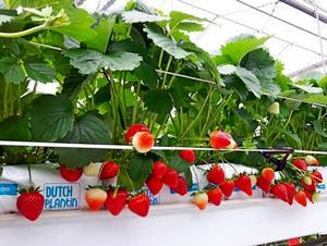 Какую сельскохозяйственную продукцию выгодно выращивать?