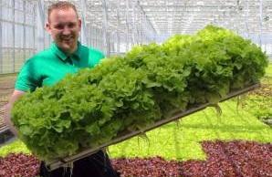Выращивание зелени: как заработать на здоровом питании для людей