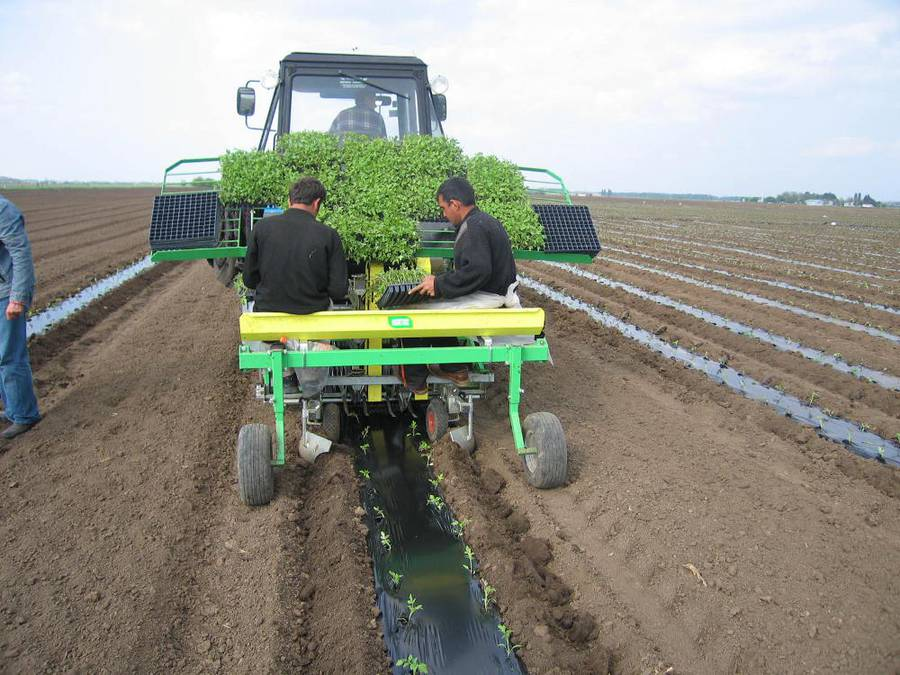 Оборудование для выращивания моркови 32