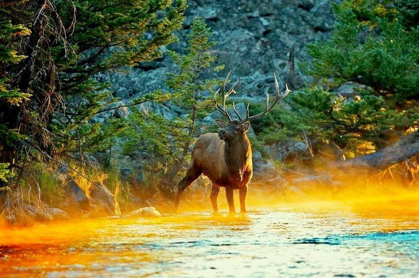 Минприроды впервые оценило стоимость леса, воды и животных страны