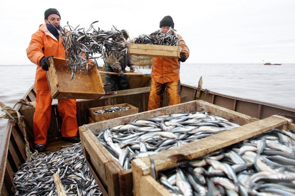 В РФ  из-за новых налоговых ставок могут вырасти цены нарыбу