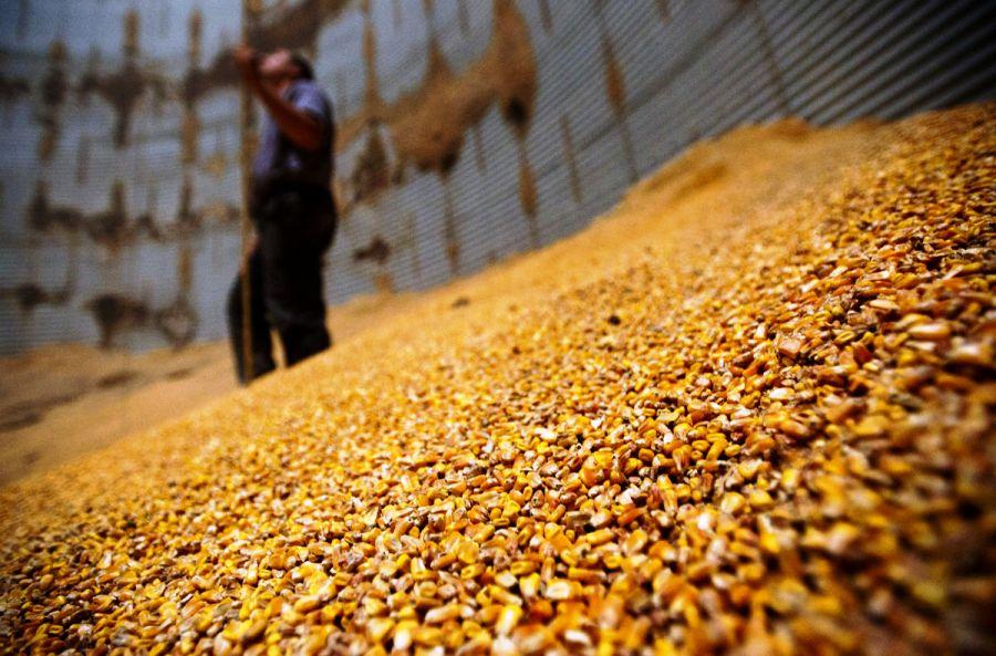 Открытие собственного бизнеса по обработке зерна Обработка, очистка и хранение зерна является самостоятельным направлением в бизнесе