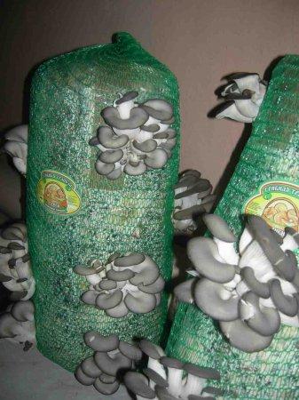 Выращивание грибов - бизнес-идея