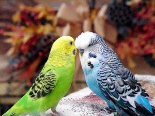 Фото: Попугаи разные.