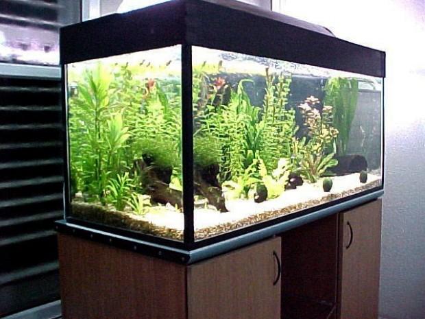 Бизнес план по разведению пресноводных аквариумных рыб