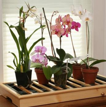 Знаменитые экзотические цветочки орхидеи замерзли появляться в Европе едва...