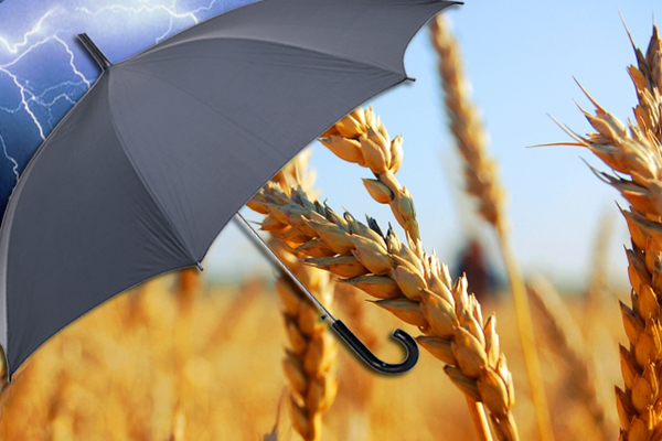 Перепродажа зерна бизнес план бизнес план оценки бизнеса