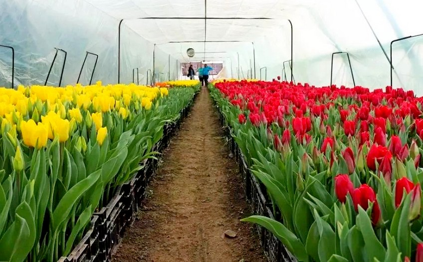 Выращивание цветов
