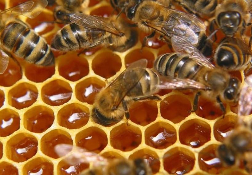 Пчеловодство как бизнес - с чего начать производство меда в 2019 году